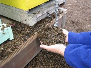 handsfull-of-dead-bees[1]